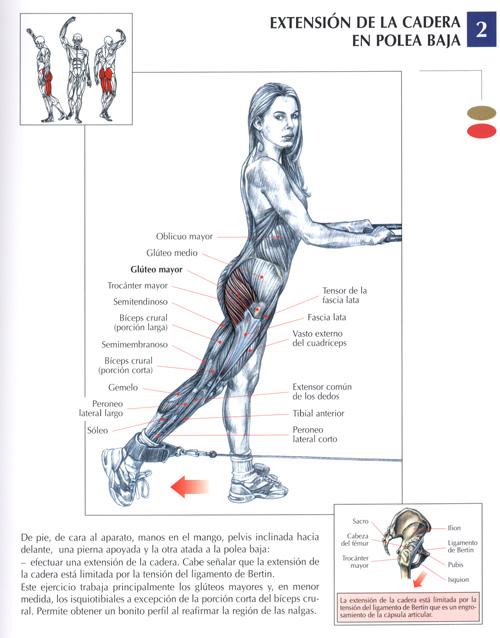ejercicio pierna pompa: